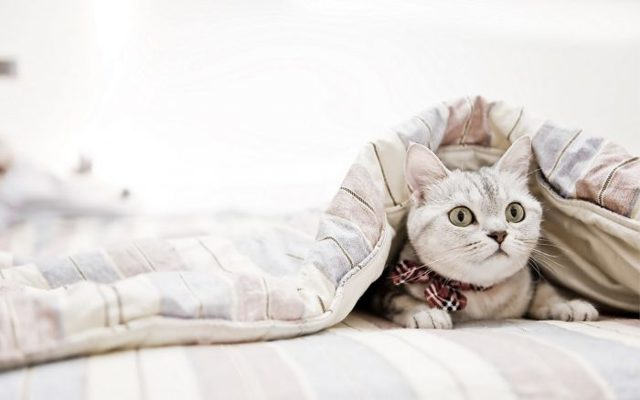 Выбираем одеяло для двигателя «Автотепло»